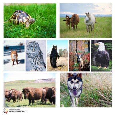 A Native View on Spirit Animals and Animal Medicine